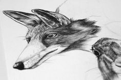 ©LaraBispinck #illustration #animal #fox #realistic