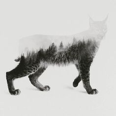 Andreas Lie, lynx, composite, illustration, collage