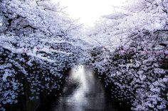 Stunning Photos of Japan's Cherry Blossom by Nationwide Geographic