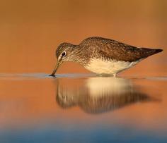 Birds of Italy: Beautiful Birds Photography by Lorenzo Magnolfi