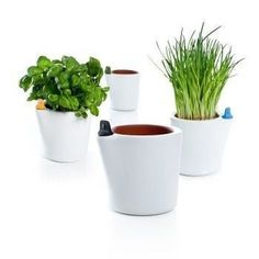 These terracotta flower pots are self watering, so you can keep your plants alive even while on short trips out of town. Porous water chambe