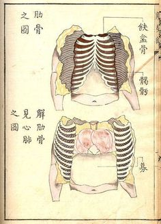 Kaishi Hen, an 18th Century Japanese anatomical atlas | The Public Domain Review #japanese #anatomical