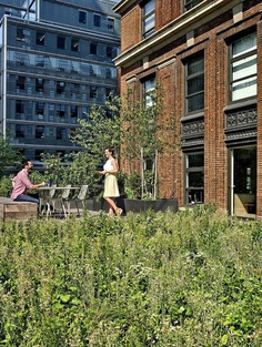 A Biophilic Design Studio Designed for Wellness in a Historic Office Tower 11