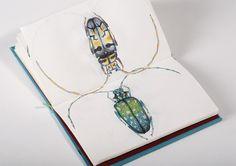 Le mond des insectes / ESAG Penninghen, Paris on the Behance Network #illustration #bugs #drawings