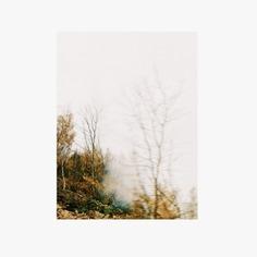 #autumn #color #wahnerheide #prisma #nature PHOTOGRAPHIE © [ catrin mackowski ]