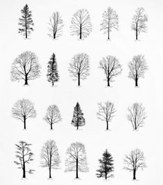 FFFFOUND! #silhouette #trees