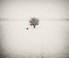 Haiku Under The Snowflakes, With Passing Bird And A Tree, photography by Andrei Baciu