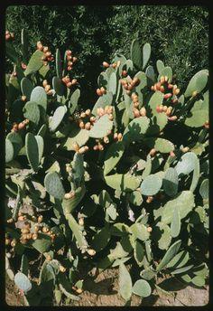 Cactus along Ojai Santa Paula Hwy #cactus #ojai