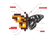 TEDx Rxc3xadodelaPlata 2011 #icon #infographic #design #graphic #illustration