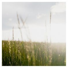 Hood River Oregon by MakerUnion on Etsy #sun #sunse #grass #gorge #nature #photography #hood #river #columbia #oregon