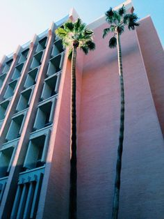 From weareorangejuice.com #palm #trees #pink