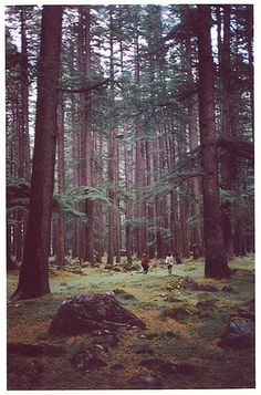 FFFFOUND! | sail to the moon. #forest #retro