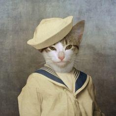 Kitschy Living #sailor #cat