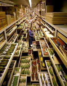 Inside the museum warehouse.  Amazing photo of the bird specimen storage room at the Smithsonian.