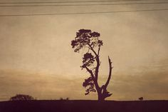 Tales from the Midlands II on the Behance Network #curve #field #tree #sepia #wires #photography #branches #isolation