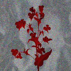 #friday #flower #series 02 —B.