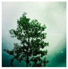 obra personal « Juegos de Luz {by Mertxe Alarcón} #tree