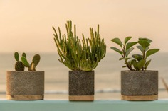 Ocean Planters These Ocean Planters are eco-friendly and sustainable pots for plants. They are made from natural calcite rock that is found on the ocean floor in Northern Perú; and are carved by hand into these functional planters. The pores of the rock acts as natural drainage to maintain only the necessary humidity.
