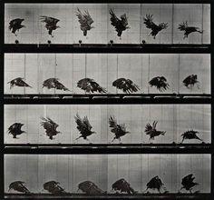 Retronaut   Animals and Humans in Motion by Eadweard Muybridge