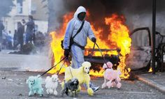 HOLGER #riotspoodles