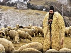 The Shepherd From Transylvania, Eduard Gutescu