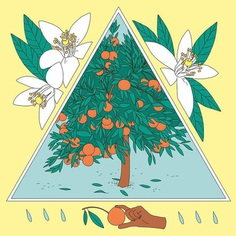 Tangerine tree for this week's @vraiment_hebdo 🍊 . . #illustration #illustrationoftheday #editorialillustration #vraimenthebdo #tangerinetree #tangerineflowers #botanicalillustration #annawandagogusey