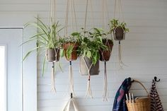 BRICK HOUSE #plants