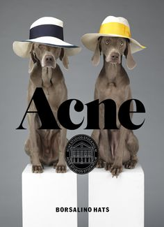 44047129454 #acne #branding
