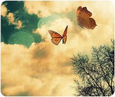 Love Supreme ~ / Mirella picture on VisualizeUs #clouds #sky #butterfly #colors #vintage