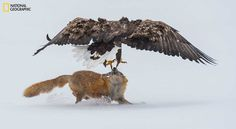 Spectacular Entries From the National Geographic Nature Photographer of the Year 2016