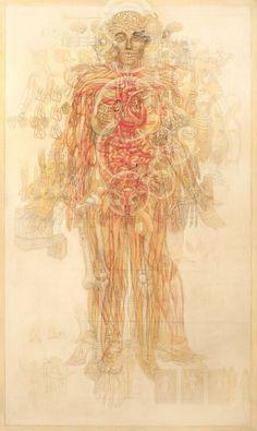 Casey Cripe Anatomy #human #illustration #body #anatomy