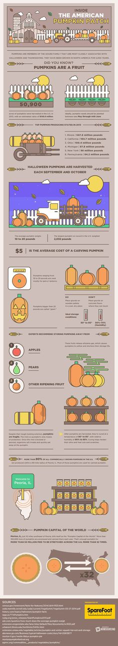 Learn all about pumpkins from this infographic. You might be surprised what a big business they are! #pumpkins #pumpkin trivia #fall trivia