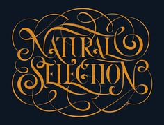 All sizes | Boris Pelcer | Socialfabrik Lettering : : : Natural Selection | Flickr - Photo Sharing! #type