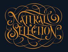 All sizes | Boris Pelcer | Socialfabrik Lettering : : : Natural Selection | Flickr - Photo Sharing! #type