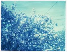 dust breeding » Archives » 402 / blue is (still) beautiful #pinhole #blue #polaroids