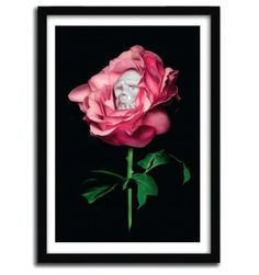 REBEL ROSE BY SHIFTY #print #art