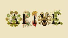 Alive   RUN: disseny gràfic   diseño gráfico   graphic design   graphisme