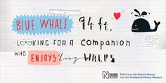 Jane Bowyer Design #whale #illustration #drawn #type #hand