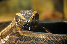 Snake #nature #snake