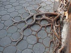 tree-roots-concrete-pavement-18