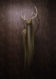FFFFOUND! | Flickr Photo Download: taxidermy_johan #taxidermy