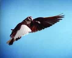 Roe Ethridge - FlatSurface - Contemporary art blog #bird
