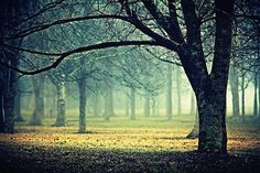 extend | Flickr - Photo Sharing! #fog #landscape #mist #nature #photography #trees