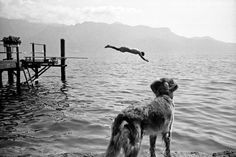 Simon Becker #white #water #watch #pier #dive #black #simon #photography #swim #and #lake #becker #dog
