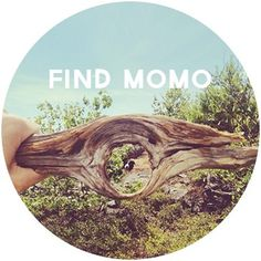 find momo #branch #momo #typography #design #graphic #find #dog