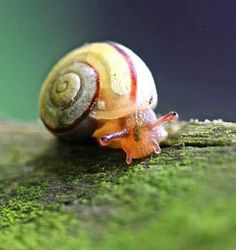 snail macro #photographie #fall #colos #photography #animal #autumn #snail #schnecke #macro