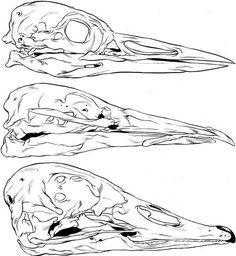 GHOSTCO #skull #bird