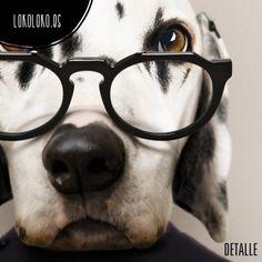 #animals #clothe #fashion #dog