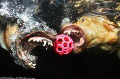 #underwater #dog #photo
