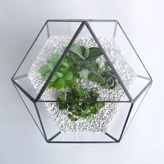 TK Polyglobe Terrarium | TINY KINGDOM #homewares #plants #greenery #terrarium #cacti #interiors #geometric #succulents #craft #terrariums #summer #spring #cactus #plant